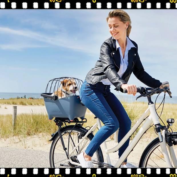 basil buddy kutyaszállító kosár kutyával